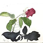 rose and shadow study by taariqhassan