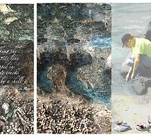 Walking the Tide Line by Lyn Fabian
