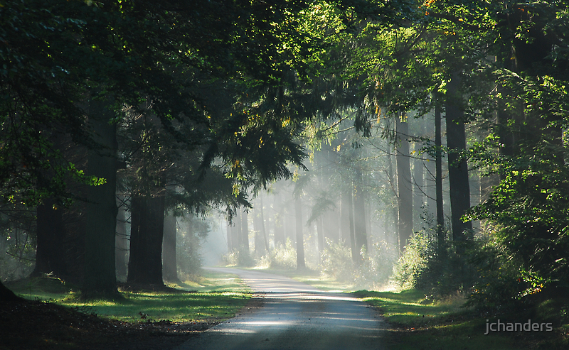 On a hazy forest road by jchanders