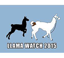 Llama Watch 2015 Photographic Print