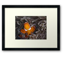 Anemone Fish Framed Print