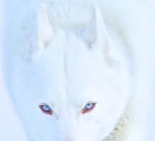 White As Snow Sticker