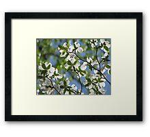 ~Dogwood Blossoms In The Sky~ Framed Print