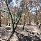 Regeneration after devastating Sampson Flat Fire. Adelaide Hills. by Rita Blom