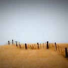 golden fields by angelo marasco
