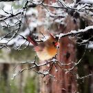 First Snow by Jarede Schmetterer