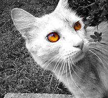 Cat Eyes by Lindsay Dean