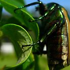 Green Beetle, Malibu, California, US by Sherry Lynn Crawford