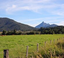 Mt Warning by Elaine Harriott