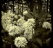 Wild Garlic by Friederike Alexander