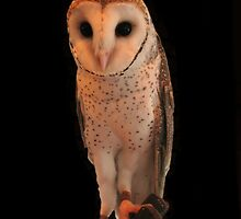 Owl by KeepsakesPhotography Michael Rowley