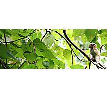 Arborealism Photographic Print