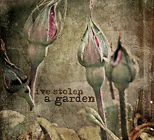 I've Stolen A Garden by Julia  Thomas