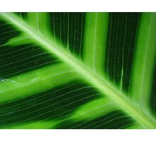 Green Stripes Photographic Print