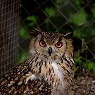 Eagle Owl by Trevor Kersley