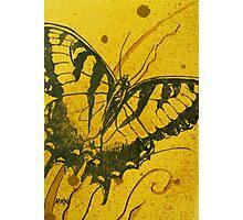Medium Butterfly study 3 Photographic Print