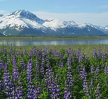 Alaska In Bloom by Selena Dittberner