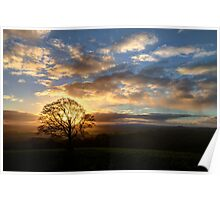 Lone hill top tree at sunset Poster