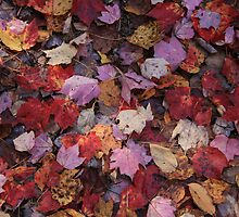 Autumn Leaves  by Selena Dittberner