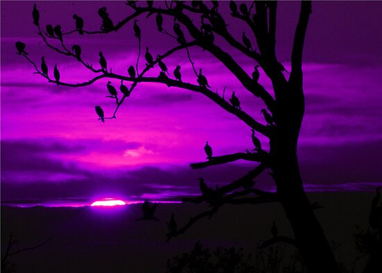 LAST LIGHT (in purple) by Lori Deiter