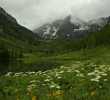 Flowering at Maroon Bells by Daniel Doyle