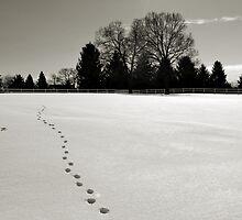 Follow the Tracks by Brian Gaynor