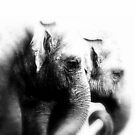 Elephant Friendly by Deanna Roberts Think in Pictures