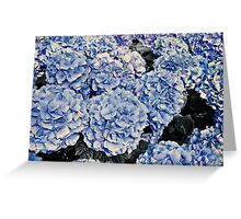 Hydrangea Flowers Greeting Card