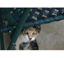 Miss Kit Kat Photographic Print