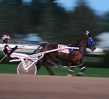 A day at the harness races in Saratoga, New York. by Sandy  Tyler