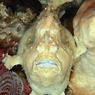 Giant Frogfish by MattTworkowski