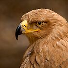 Tawny Eagle by Stuart Robertson Reynolds