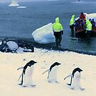 Adelie penguins walking past tourists by cascoly