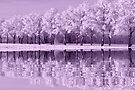 NATURES WINTER MIRROR (purple edition) by Johan  Nijenhuis