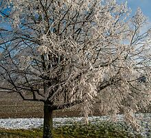 Winter Scene - Frosted Tree by Mark Bangert
