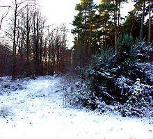 Winter Contrast by Trevor Kersley