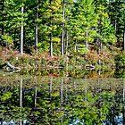 Shore Reflection by Rebecca Bryson