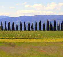 Tuscany countryside by tati69