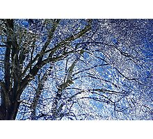 Ice Storm at Maple Photographic Print