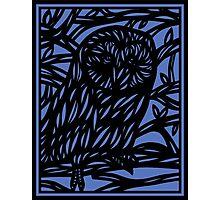 Seek Owl Blue Black Photographic Print