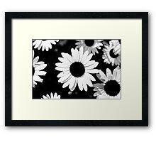 Daisies, Black and White Framed Print