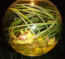 Orchids in Bowl by skyhorse