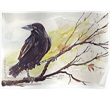 Crow on a bough Poster