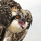 Osprey Emotions by George Cathcart