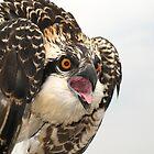 Osprey Emotions by George Cathcart