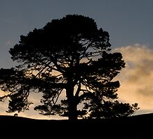 Silhouetted Tree at Hobbiton by Jeanne Frasse