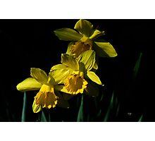 Golden Bells Photographic Print
