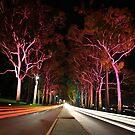 Kings Park Traffic  by EOS20