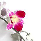 Orchid (Edited version) by Anaa