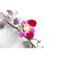 Orchid (Edited version) Photographic Print